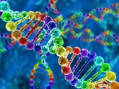 试管婴儿过程中,究竟是谁的基因选择了孩子的智商和容颜?
