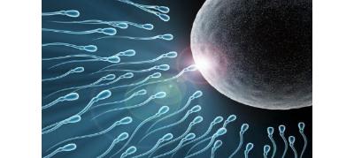 泰国试管婴儿取多少卵才能怀上?取多少卵子成功率最高?